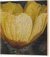 Yellow Flower 4 Wood Print
