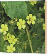 Yellow Flower And A Black Bug  Wood Print