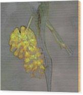 Yellow Flower Art Wood Print