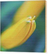 Yellow Flower Bud 2 Wood Print