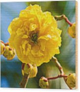 Yellow Flower Close-up Wood Print