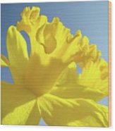 Yellow Flower Floral Daffodils Art Prints Spring Blue Sky Baslee Troutman Wood Print