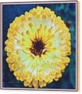 Yellow Flower H B With Decorative Ornate Printed Frame Wood Print