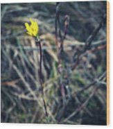 Yellow Flower In Dry Autumn Grass Wood Print