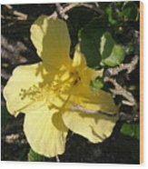 Yellow Flower In The Shade Wood Print