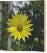 Yellow Flower In Woods Wood Print