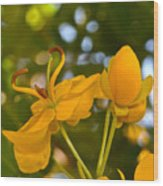 Yellow Flower Wood Print by Lori Kesten