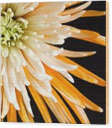 Yellow Flower On Black Wood Print