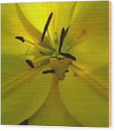 Yellow Flower Wood Print