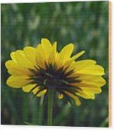 Underside, Petals, Yellow Wood Print