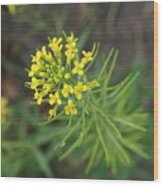 Yellow Flower Weed Wood Print