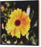 Yellow Flower With Rain Drops Wood Print