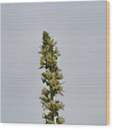 Yellow Flowers And Buds. Wood Print