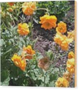 Yellow Flowers Bushes Wood Print