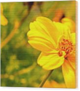 Summers Glory In Bloom By Earl's Photography Wood Print
