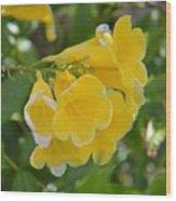 Yellow Freesias Wood Print