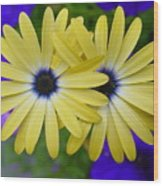 Yellow Flowers Embracing Wood Print