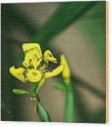 Yellow Flowers I Wood Print