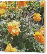 Yellow Flowers In May Wood Print
