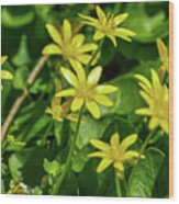 Yellow Flowers On A Green Carpet Wood Print