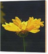 Yellow Flowers2 Wood Print