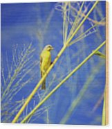 Yellow Fronted Canary Wood Print
