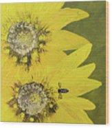 Yellow Gazanias And Bee  Wood Print