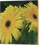 Yellow Gerbera Daisies By Kaye Menner Wood Print