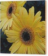 Yellow Gerbera Daisies Wood Print