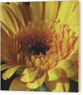 Yellow Gerbera Macro Wood Print