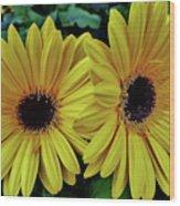Yellow Gerberas Wood Print