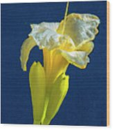 Yellow Glue Blue #f9 Wood Print