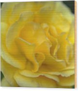 Yellow Golden Single Flower Wood Print