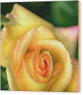 Yellow Golden Single Rose Wood Print