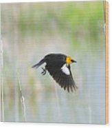 Yellow Headed Blackbird On The Wing Wood Print