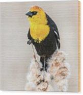 Yellow Headed Blackbird #4 Wood Print