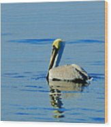 Yellow Headed Pelican Wood Print