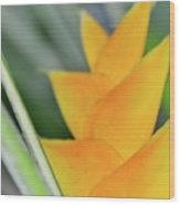Yellow Heliconia - Hawaii Plants Flowers  Wood Print
