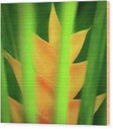 Yellow Heliconia - Tropical Hawaii - 957 Wood Print