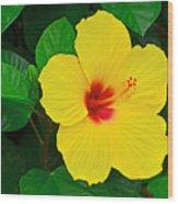 Yellow Hibiscus 3388 Wood Print