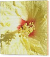 Yellow Hibiscus Close Up Wood Print