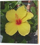 Yellow Hibiscus Shadows Wood Print