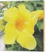 Yellow Hibiscus St Kitts Wood Print