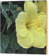 Yellow Hibiscus Watercolor Wood Print