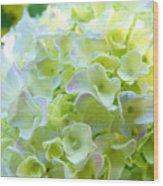 Yellow Hydrangea Flowers Art Prints Baslee Troutman Wood Print