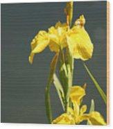 Yellow Iris 2 - Floral Wood Print