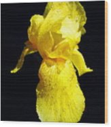 Yellow Iris After The Rain Wood Print