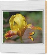Yellow Iris And Butterfly Wood Print