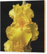 Yellow Iris Flower Still Life Wood Print
