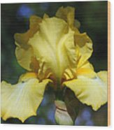 Yellow Iris Is For Passion Wood Print